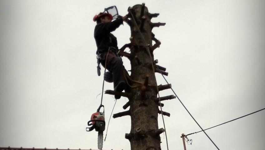 rezanie vo výškach - pílenie kmeňa