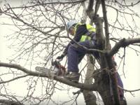 výškové práce - opílovanie ovocných drevín