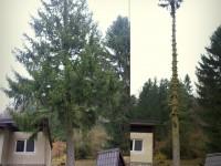 Pílenie 30 metrového smreka vedľa chaty