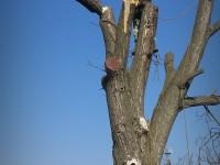 pílenie stromu po častiach