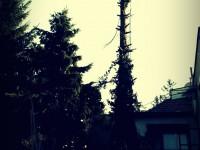 pílenie stromu v rizikovom dvore