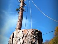 spúšťanie častí stromu