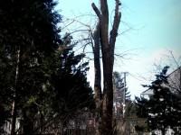 vypílenie stromu spomedzi káblov
